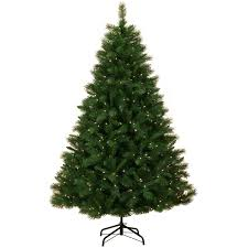 Dunhill Fir Christmas Trees by Christmas Tree David Jones Christmas Lights Decoration