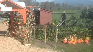 Pumpkin Patch In Fresno Ca by Laity Pumpkin Patch Part1 Youtube