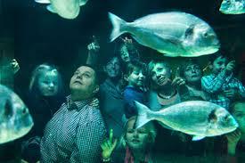aquarium geant a visiter belgique découvrir la belgique ferme auberge de la hooghe moote