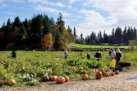 Swan Farms Snohomish Pumpkin Patch by Everett U0026 Snohomish County Area Pumpkin Patches Cedar Cross