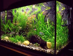 64 best The Planted Tank images on Pinterest