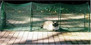 cats on deck kittywalk outdoor net cat enclosure for decks patios