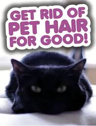 Dog Hair Carpet Removal by Get Rid Of Pet Hair For Good Clean My Space