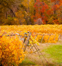 Pumpkin Moon Oak Park Illinois by The Good Life Along Illinois U0027 Shawnee Hills Wine Trail Midwest