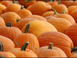 Pumpkin Patch Santa Rosa by Where To Find Pumpkins In The Napa Valley Napa Valley Ca Patch