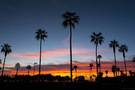 Palm Trees At Sunset In Mission Beach San Diego California