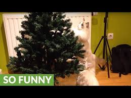 Christmas Tree Cataract Surgery by Cat Proofing Your Christmas Tree