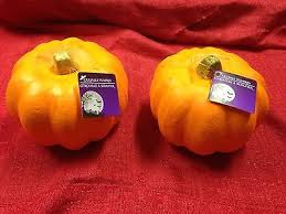 Carvable Foam Pumpkins Ideas by Pumpkin Decorating Kits And Funkins Ideas Collection On Ebay