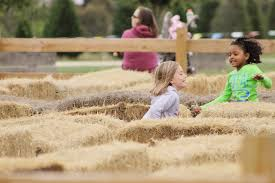 Pumpkin Patch Austin Texas 2015 by 10 Texas Pumpkin Patches That Are Worth The Trip