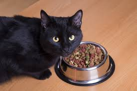 cat wont eat cat not 8 things to try when your cat won t eat catster