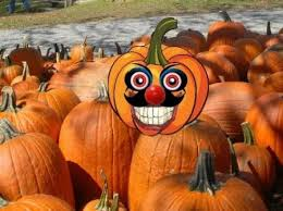 Motley Pumpkin Patch by Best Pumpkin Patches And Corn Mazes Near Miami And Ft Lauderdale