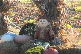 Pumpkin Picking In Ct by Best Pumpkin Picking Patches In Ny Nj Connecticut Cbs New York