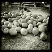 Pumpkin Patch Spring Tx old time christmas tree farm 53 photos u0026 26 reviews christmas
