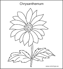 New Chrysanthemum Coloring Pages 59 For Your Seasonal Colouring With