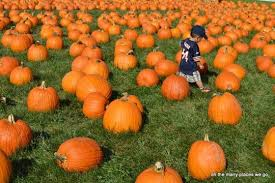 Bengtson Pumpkin Farm Chicago by Bengston U0027s Pumpkin Farm Lockport Il Kid Friendly Activity