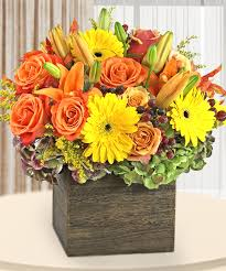 Pumpkin Patch 287 Broomfield by 100 Denver Flower Dozen Roses Delivery Denver 80202 Blog