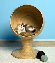 The Best Cat Furniture For Your Kitty