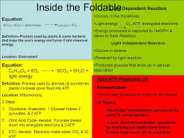Standard 3 Foldable Identify the reactants and products of