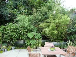 Danger Garden: Bamboo = Green Privacy Install Bamboo Fence Roll Peiranos Fences Perfect Landscape Design Irrigation Blg Environmental Filebamboo Growing In Backyard Of New Jersey Gardener Springtime Using In Landscaping With Stone Small Square Foot Backyard Vegetable Garden Ideas Wood Raised Danger Garden Green Privacy For Your Decorative All Home Solutions Spiring And Patio Small Square Foot Vegetable Gardens Oriental Decoration How To Customize Outdoor Areas Privacy Screens