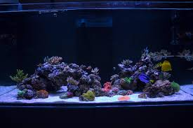 Minimalist Aquascaping | Page 14 | REEF2REEF Saltwater And Reef ... 75 Gallon Tank Aquascape Ideas Please Reef Central Online Community Minimalist Aquascaping Page 3 2reef Saltwater And How To A Aquarium Youtube Tank Rockscape To Drill Cement Your Live Rock Gmacreef Columns In A Saltwater Callorecom Pieter Van Suijlekoms Revisited Is There Science Live Rock Sanctuary The Why I Involuntarily Redid My Mr 7
