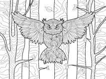 Owl Coloring Book For Adults Vector Illustration 67952592
