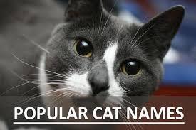 popular cat names popular cat names most popular names for kittens