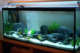 No Maintenance Fish Tanks – Dawnwatson.me 60 Gallon Marine Fish Tank Aquarium Design Aquariums And Lovable Cool Tanks For Bedrooms And Also Unique Ideas Your In Home 1000 Rousing Decoration Channel Designsfor Charm Designs Edepremcom As Wells Uncategories Homes Kitchen Island Tanks Designs In Homes Design Feng Shui Living Room Peenmediacom Ushaped Divider Ocean State Aquatics 40 2017 Creative Interior Wastafel