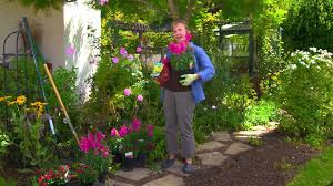how to plant fall annuals and bulbs for lasting color