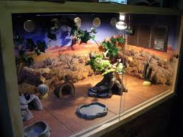 Bearded Dragon Heat Lamp Broke by Image Result For Bearded Dragon Tank Decor Bearded Dragon Cages