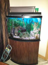 Extra Large Aquarium Ornaments by Find More Price Drop 45 Gallon Bow Front Fish Tank For Sale At Up