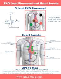 5 Lead EKG Placement And Heart Sounds