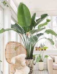 feng shui tipps pflanzen opening doors zürich