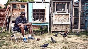 100 Pigeon Coop Plans Kings
