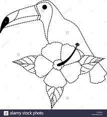 Toucan Coloriage 11 Coloriage Toucan
