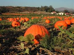 Pumpkin Patch Near Pensacola Fl by 29 Best Shop In Temecula Images On Pinterest Temecula California