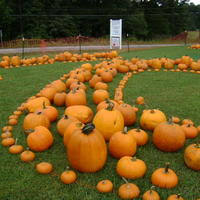 Jacksonville Nc Pumpkin Patch by 10 000 Grand Prize Pumpkin Carving Contest Greer Sc Nextdoor