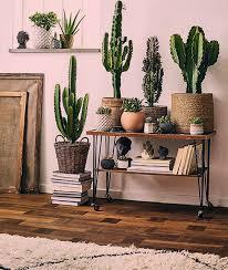 dekorativer kaktusdekor 9 rustikale
