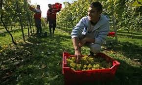 why fruit is picked by migrant workers richard seymour opinion