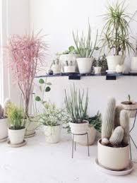 Indoor Plant Living Room Decor