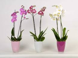 orchideen pflegen ratgeber und pflegetipps obi