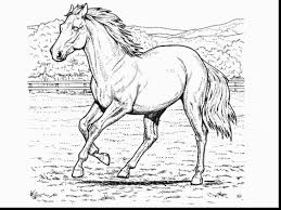 Magnificent Horse Coloring Pages With Printable And For Adults