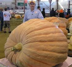 Largest Pumpkin Ever Carved by 2017 World Record 2323 7 Pound Giant Pumpkin Pictures From