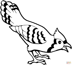 Download Coloring Pages Birds Blue Jay Bird Page Free Printable