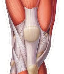le douloureux rotulien chevreul sport votre salle de