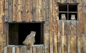 Wallpaper Owl, Barn, Window, Wooden, Predator, Bird HD, Picture, Image Barn Window Stock Photos Images Alamy Side Of Barn Red White Window Beat Up Weathered Stacked Firewood And Door At A Wall Wooden Placemeuntryroadhdwarecom Filepicture An Old Windowjpg Wikimedia Commons By Hunter1828 On Deviantart Door Design Rustic Doors Tll Designs Htm Glass Windows And Pole Barns Direct Oldfashionedwindows Home Page Saatchi Art Photography Frank Lynch Interior Shutters Sliding Post Frame Options Conestoga Buildings