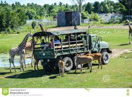 Side View Of Tourists In Truck Feeding Animals In Safari Editorial ... Easter Jeep Safari Concepts Wagoneer Jeepster A Baja Truck And Pamoja Friends Family 2018 Scott Brills Renault Midlum 240 Expeditionsafari Truck Bas Trucks Mercedes Stock Photo Picture And Royalty Free Image Proud African Safaris Mcdonalds Building Blocks Youtube First Orange Tree Toys Elephant Edit Now Shutterstock Axial Rc Scale Accsories Safari Snorkel For Rock Crawler Truly The Experience Safari At Port Lympne Wild Animal Park Playmobil With Lions Playset Ebay