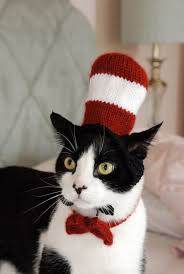 costume for cat cat in the hat costume jpg why evolution is true