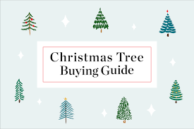 Best Smelling Christmas Tree Types by Buying A Christmas Tree Guide Christmas Tree Types Apartment