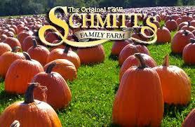 Pumpkin Patch In Long Island New York by F U0026w Schmitt U0027s Family Farm Home Facebook