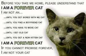 service cats feral cat spay neuter service in yreka ca